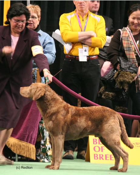 Dog Kennel Shrewsbury Nj